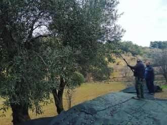 Atolye Deneme_birinci zeytin hasadi bulusması9